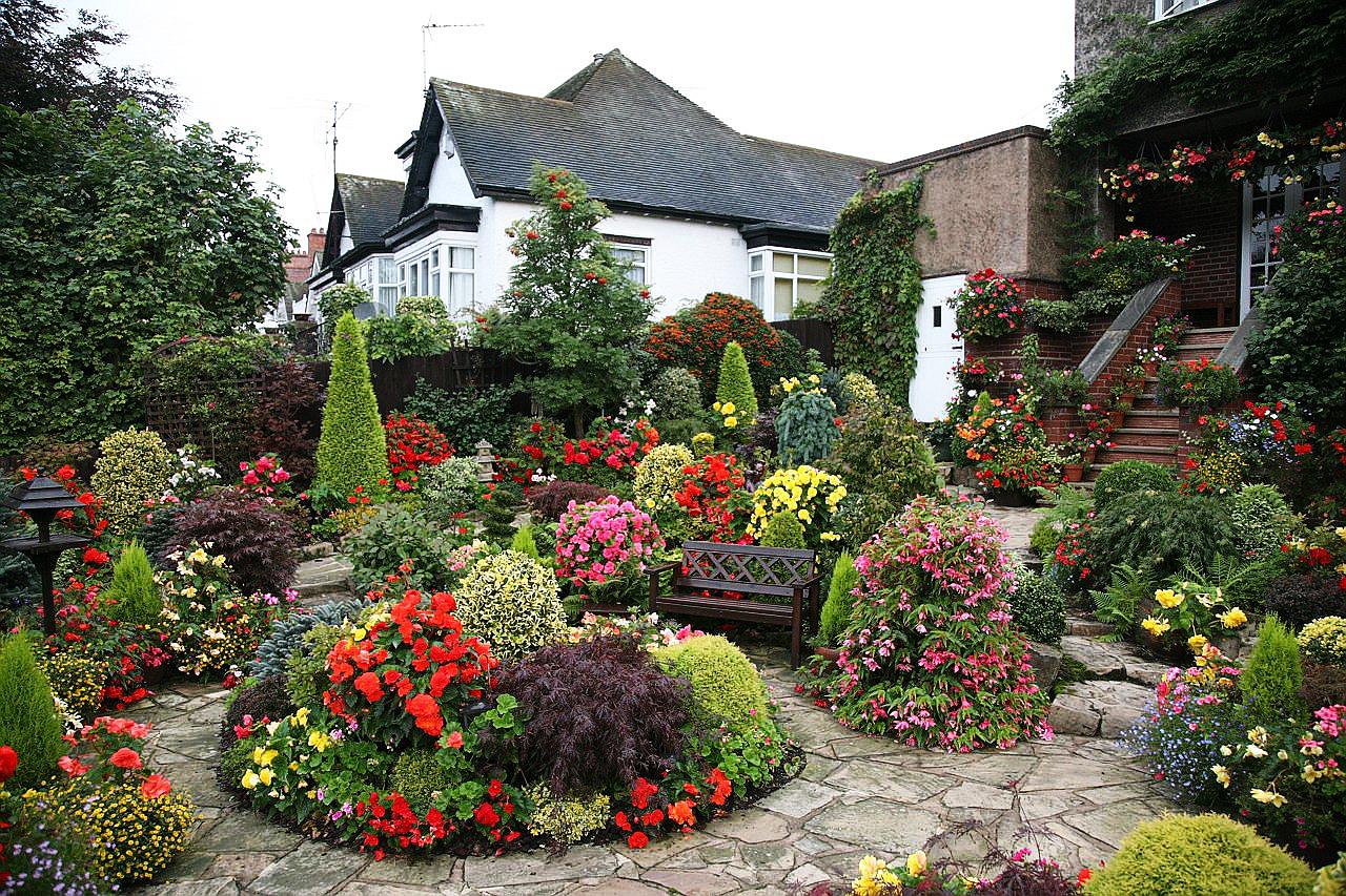красивые цветы на садовом участке