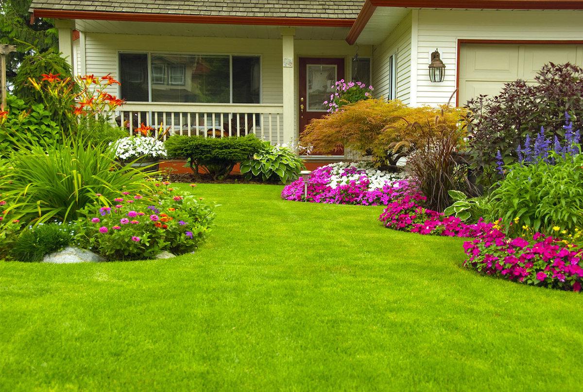 газон с травой для отдыха на участке