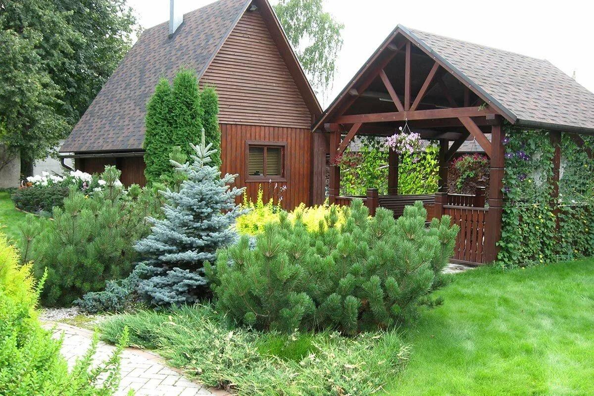 деревья и кустарники на садовом участке