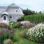 нежная растительность на садовом участке