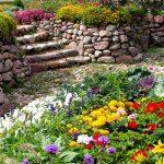 яркие цветы на дачном участке