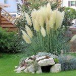 красивые растения с камнями на дачном участке