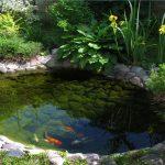 прудик с рыбками на дачном участке